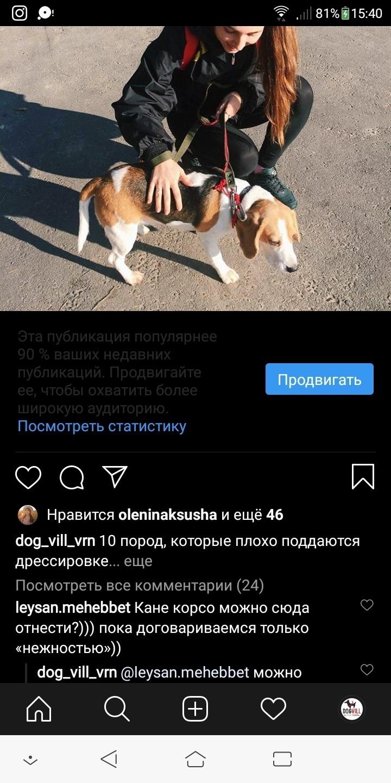 Кейс: продвижение стартапа по выгулу собак, изображение №5
