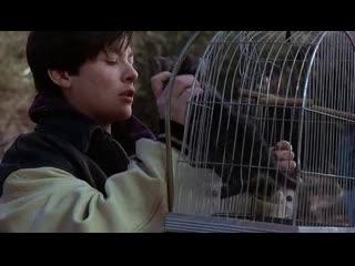 Кладбище домашних животных 2 (1992) (Pet Sematary 2) ужасы