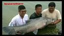 Черный Амур весом 75 кг на фистевале рибаков в Китае