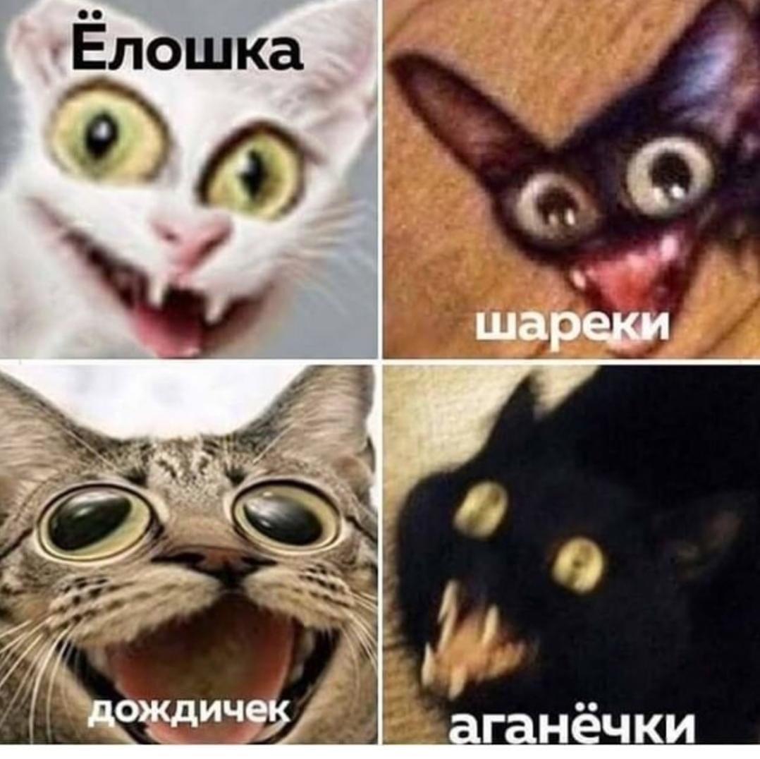 uxuHIB CeVE - А Ваши котики готовятся Вам помогать?