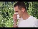 Результат по здоровью Coral Club Аллергия на амброзию