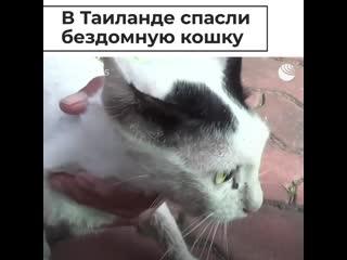 В Таиланде спасли бездомную кошку