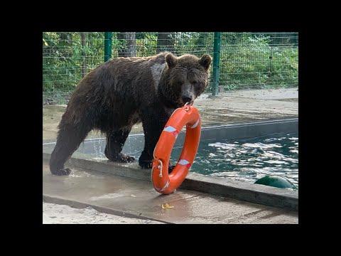 🐰🐨🐻Интрига дня! Медведь думает что он человек!