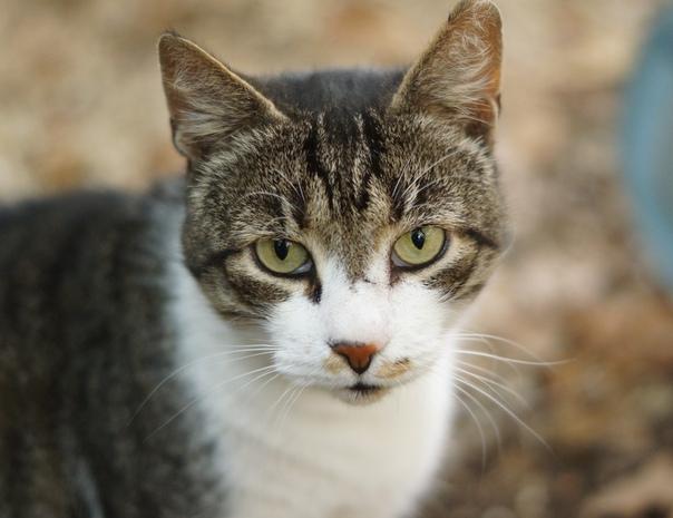 Коты дворняги характер