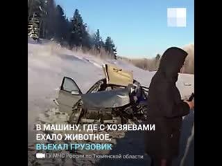 Тюменские спасатели отыскали в лесу пса, попавшего в ДТП вместе с хозяевами