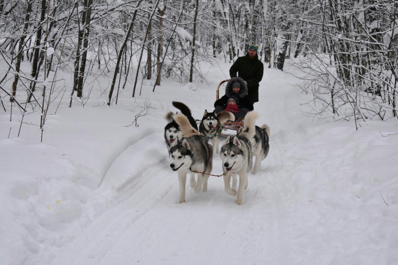 Афиша Лыжный тур - в гостях у Хаски, 21.12.19