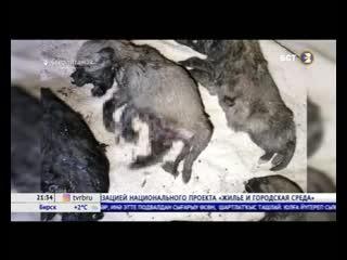 «я в шоке, что ребенок такой» взорвавшие щенят дети из башкирии ранее кидали петардами в бабушек