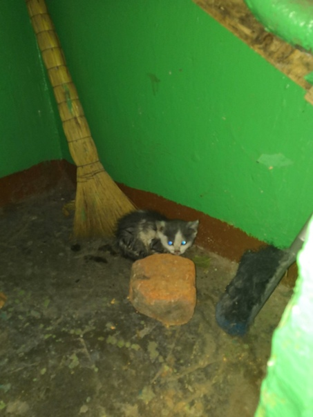 На луначарского 28 найден котенок, себе оставить не можем т.