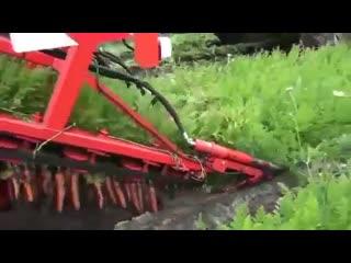 Может кто и видел, но лично я такое вижу впервые ))) Уборка моркови.