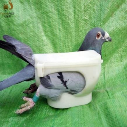 Фиксатор для голубей