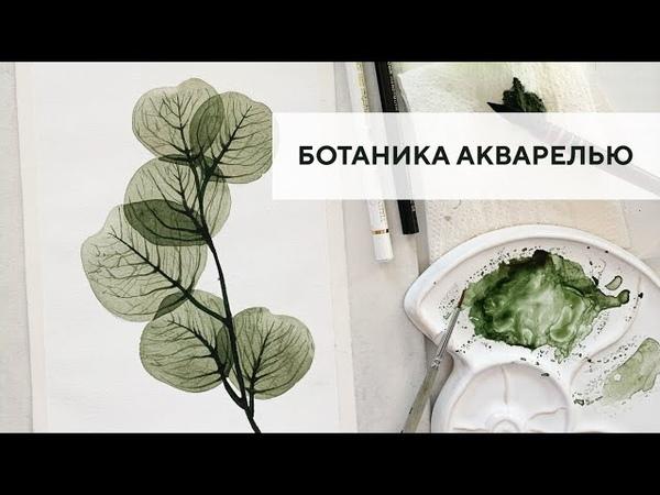 Ботаническая иллюстрация акварелью Botanical illustration with watercolor