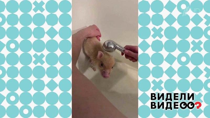 Видели видео Фрагмент выпуска от10.11.2019 Диана Мулевская и минипиг Булочка