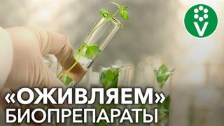 Как улучшить и продлить жизнь биопрепаратам на основе сенной палочки? (Фитоспорин, Бактоген и др)