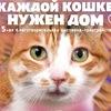 Каждой кошке нужен дом!