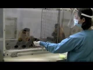 Capuchin Monkeys Reject Unequal Pay