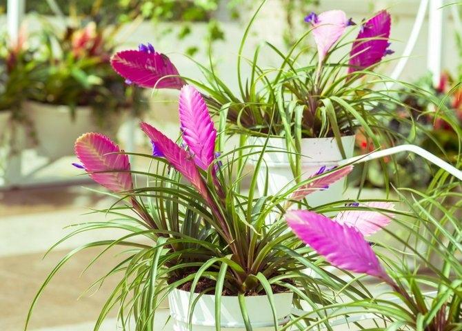 5 комнатных растений, которые избавят дом от сырости и плесени