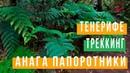 ТЕНЕРИФЕ ТРЕККИНГ- ПАПОРОТНИКИ В АНАГЕ