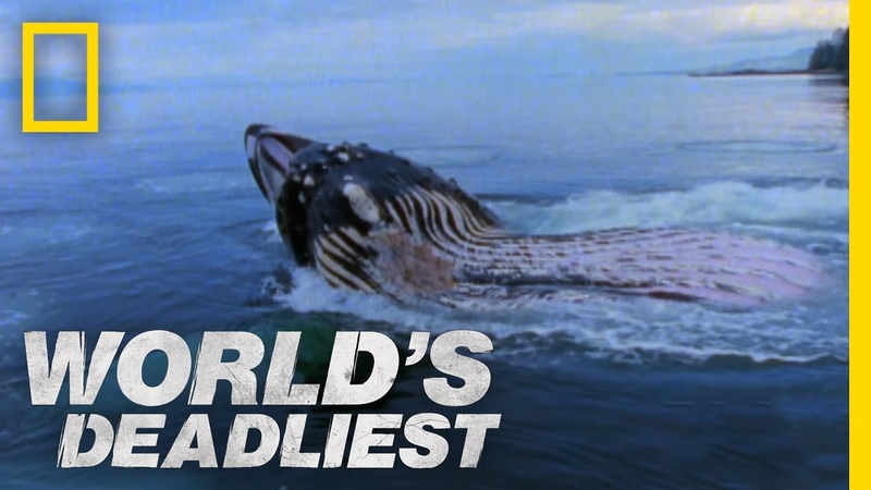 Giant Jaws of Death World's Deadliest