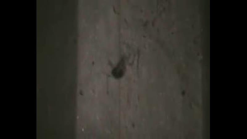 в заброшенном помещении типографии-паук-насекомое испугало певца пророка сан боя.