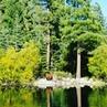 "Galena Creek Regional Park on Instagram: ""Meanwhile, at Marilyn's Pond...🐻🌲🍂🍁🌲 blackbear swim sushi galenanaturemoment galenacreekregionalpark @nevadawildlife @washoecountynv"""