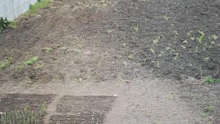 Посадили фундук, вишню. Обзор огорода, рассады в середине апреля. //Валентина Земскова.