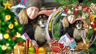 """Акция """"Подарки от Деда Мороза"""". Приют для бездомных животных. (НГ 2019)"""