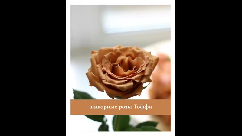 Два бомбических сорта пионовидных роз лучших плантаций в наличии большая редкость по такой приятной цене коллеги точно подтве
