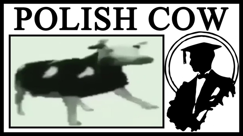 Why Dancing Polish Cow Is Great