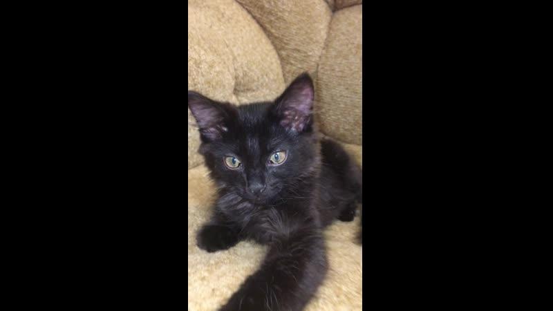 Котик около 2 месяцев ИЩЕМ ДЛЯ КОТИКА МАМПАП ☎️ 7 983 462 83 48 Светлана