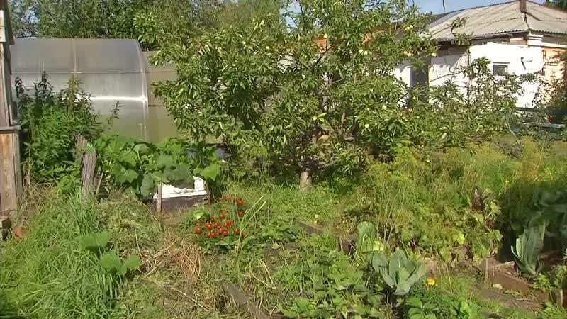 Ксения Белик о подготовке к выставке урожая- «Прочитали сказку Родари и решили сделать»