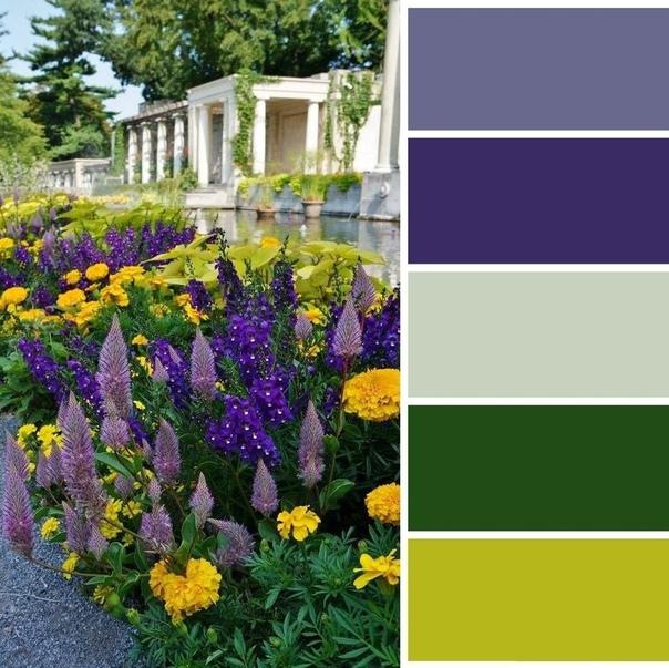 Новые цветовые схемы для ваших клумб