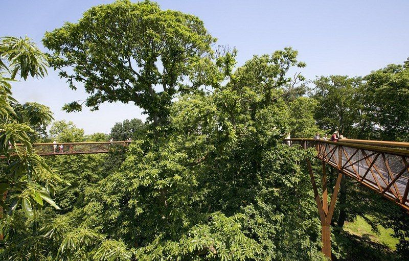 Tree Top Walkway By Marks Barfield Architects
