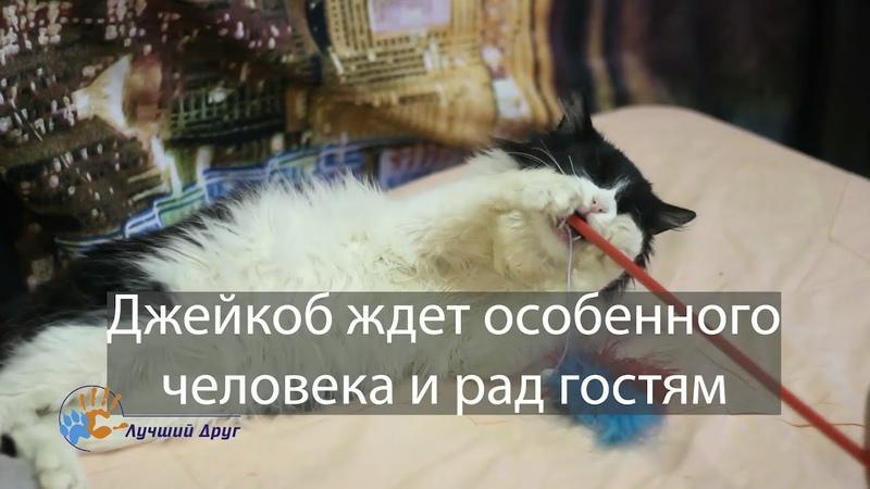 Замечательный кот Джейкоб