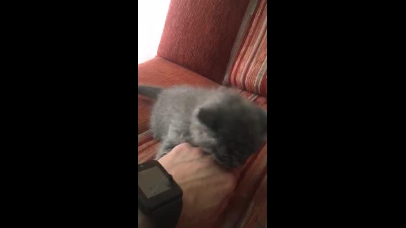 VIDEO-2019-08-21-10-31-15.mp4
