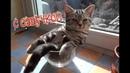 Приколы с котами С ОЗВУЧКОЙ – СМЕШНЫЕ ЖИВОТНЫЕ – РЖАКА ДО СЛЁЗ - PSO