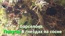 Барселона. Попугаи в гнездах в парке Цитадели