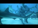 Grand Bahama Shark Dive with UNEXSO