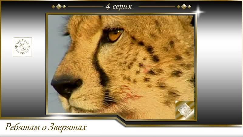 BBC Ребятам о зверятах 4 серия BBC All about animals 04