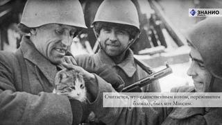 Классный час по теме «Блокада Ленинграда»