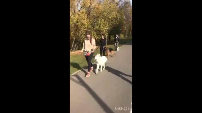 Выход в город с собаками Послушание