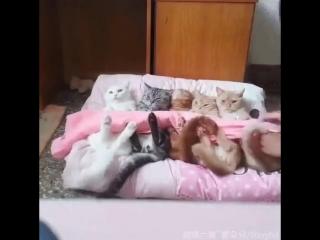 Внучка приехала к бабушке в деревню)  Собака спряталась, коты не успели)