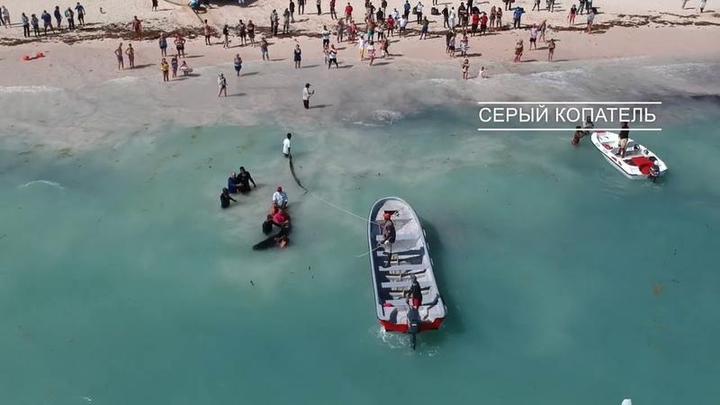 Спасение маленького кита на берегу атлантического океана Туристы спасли кита Мама ждала его в море