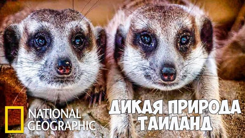 Дикая природа Таиланда Часть 1 из 2 Документальный фильм про животных National Geographic