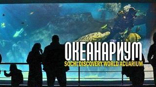 Океанариум Сочи - Sochi Discovery World Aquarium