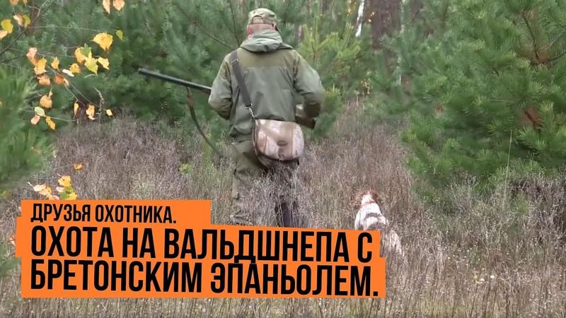 Друзья охотника Охота на вальдшнепа с бретонским эпаньолем