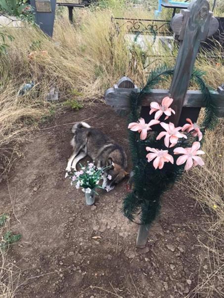 Пёсик из Кривого Рога целых 3 года провел на могиле хозяина... Несмотря на то, что многие соседи покойного знали о трагической судьбе собаки, никто так и не решился забрать его к себе. Так