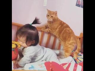 Собака - друг человека, а кот вообще - брат!