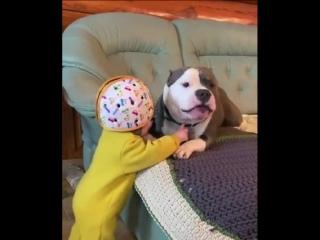 Настоящая дружба. нельзя так собаку пускать близко к ребёнку, какая бы она не была это животное.