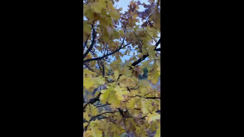 Видео от Екатерины Хинской