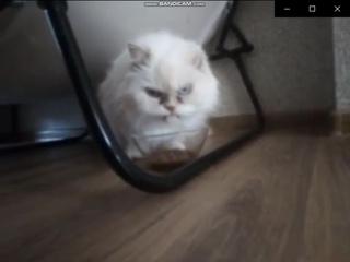 Пародия на рекламу Мокрый корм (Аппетитные кусочки) для кошек Purina Gourmet Gold